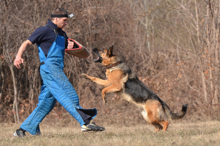 Man vs Dog à Cracovie EVG